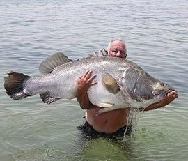 Business marketing perth big client (fish)